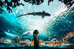 Visita al acuario de Canadá